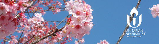 Pink cherry blossoms against blue sky (credit: Sally Carroll, UU Stock Photo