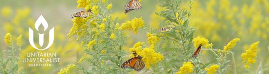Image: monarch butterflies on goldenrod plants